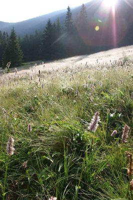 Ein Julitag im Riesengebirge