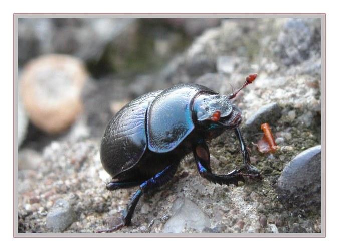 .. ein Käfer ...