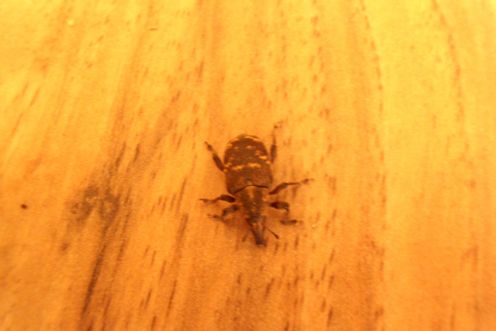 Ein Käfer