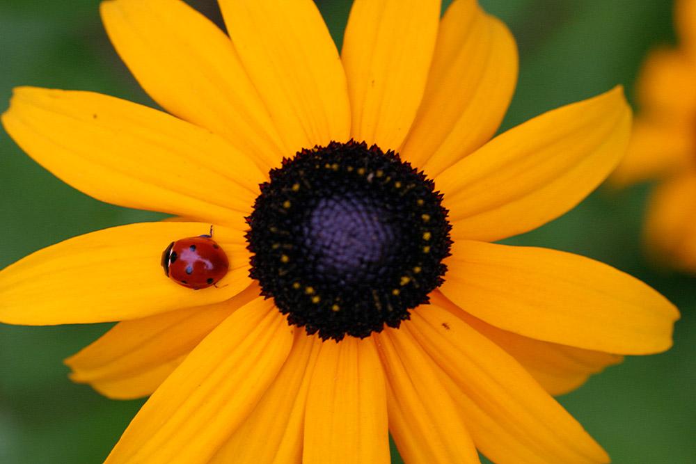 Ein Käfer auf Abwegen