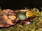 Ein Käfer in der Nacht
