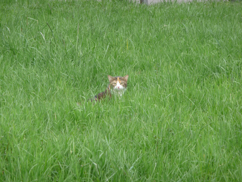Ein Kätzchen auf der Pirsch