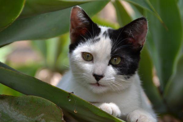 Ein Kätzchen zum Verlieben!