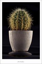 Ein Kaktus