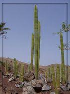 Ein Kaktus wie aus einem Western.