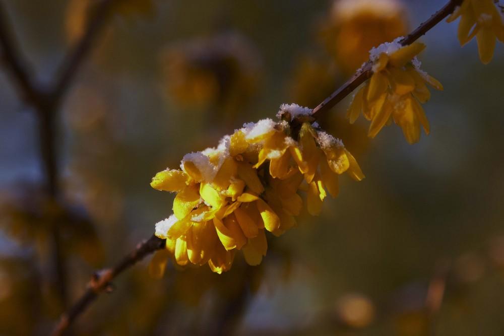Ein kalter Frühlingstag