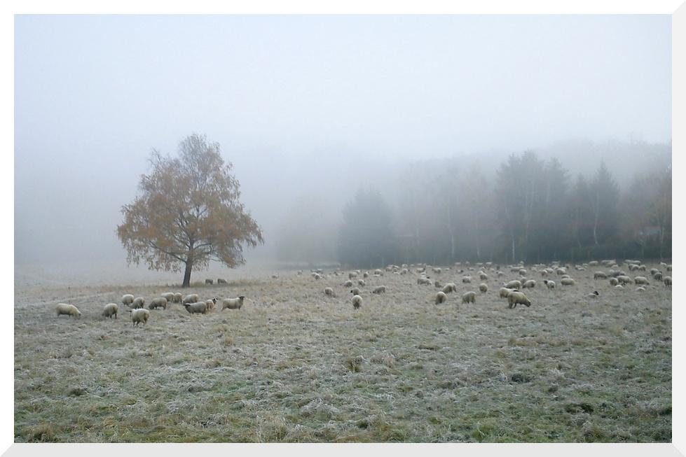 Ein kalter Herbstmorgen