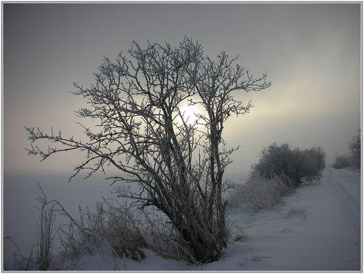Ein kalter Morgen...