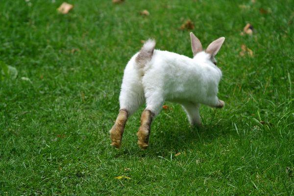 Ein Kaninchen namens Sophie...