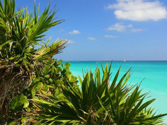 Ein karibischer Traum