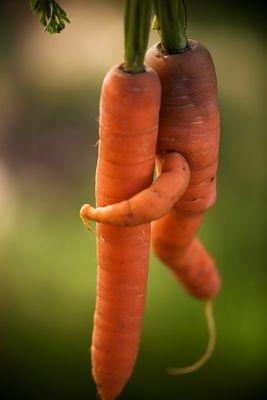 Ein Karotte hat auch ein Herz