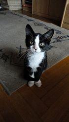 Ein Katze ist ein kleines Stück vom Glück