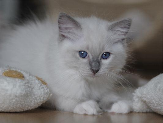Ein Katzenbaby im Alter von 10 Wochen