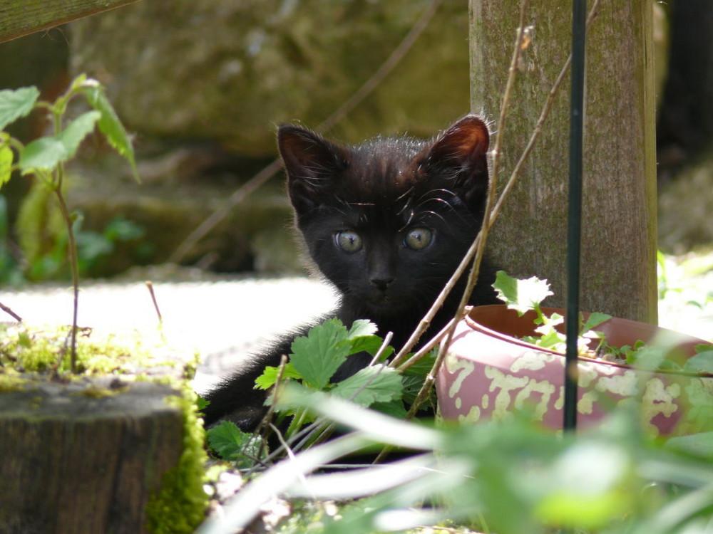 Ein Katzenjunges mal ganz andächtig.