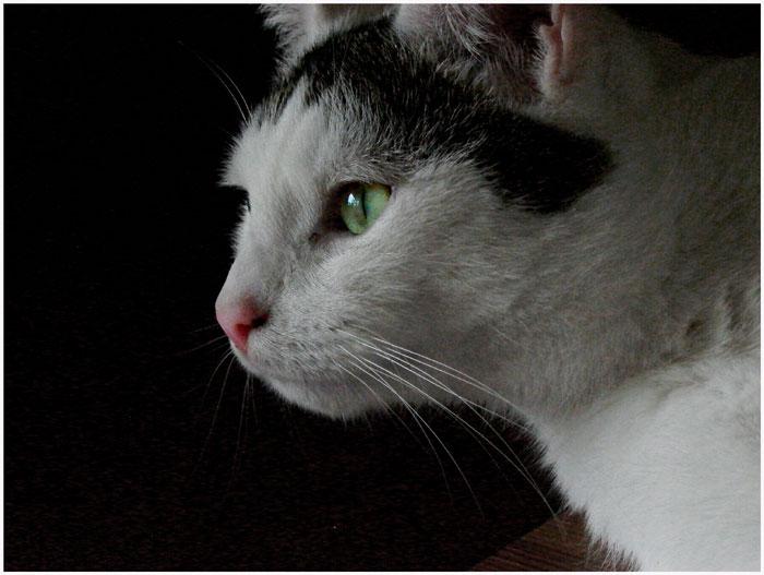Ein Katzenprofil