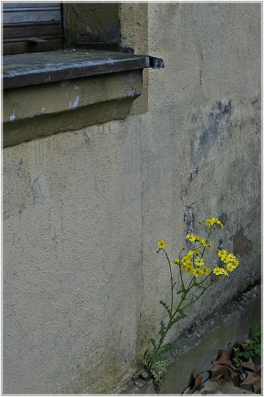 Ein keckes Mauerblümchen :-)