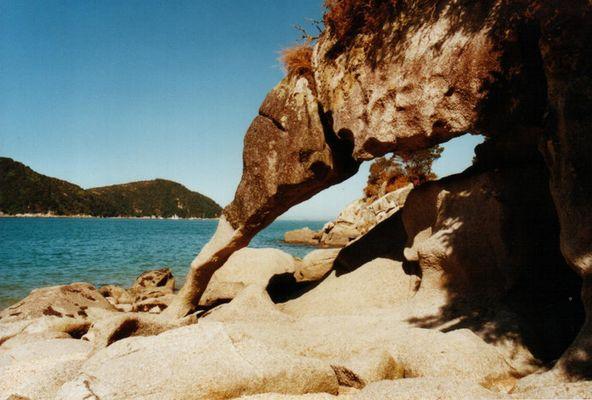 "Ein ""Kiwi"" am Strand im Abel Tasman-NP"