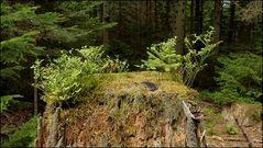 Ein Kleinbiotop im Wald...