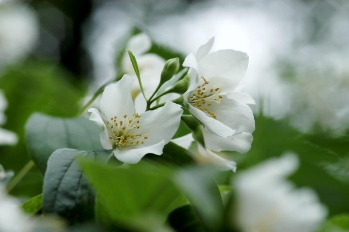Ein kleine weiße Blüte