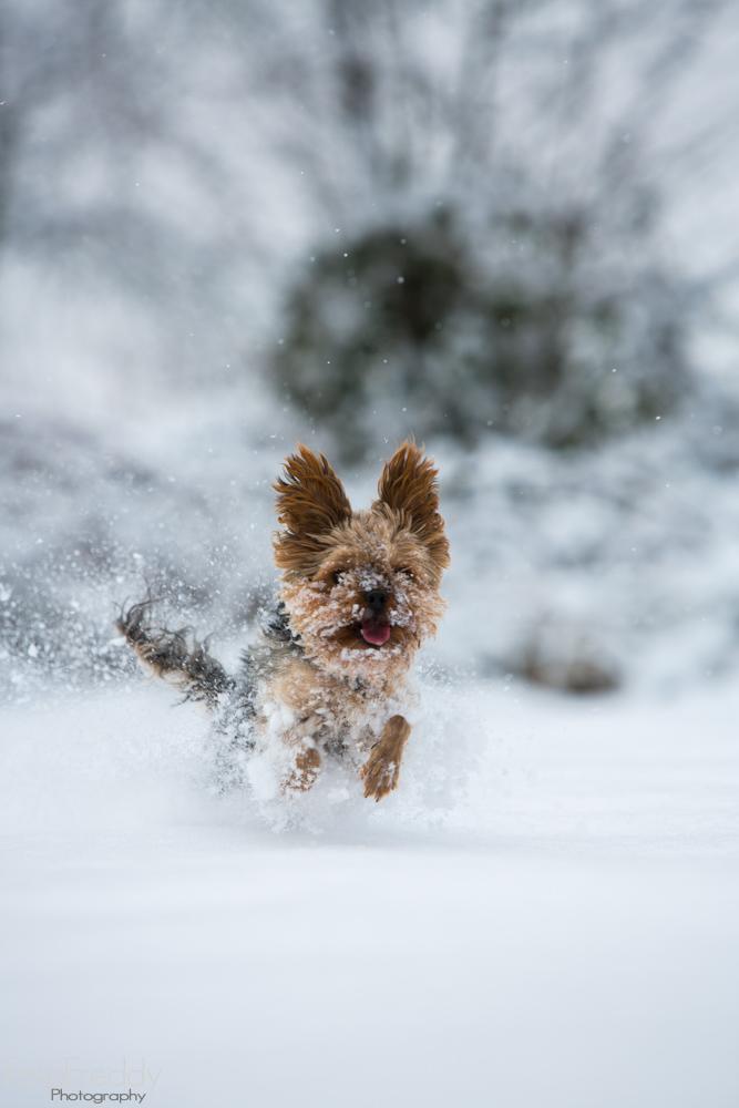 Ein kleiner aber sehr schneller Hund :-)