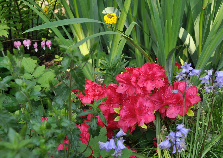 ... ein kleiner Ausschnitt aus einem der Blumenbeete in unserem Garten...