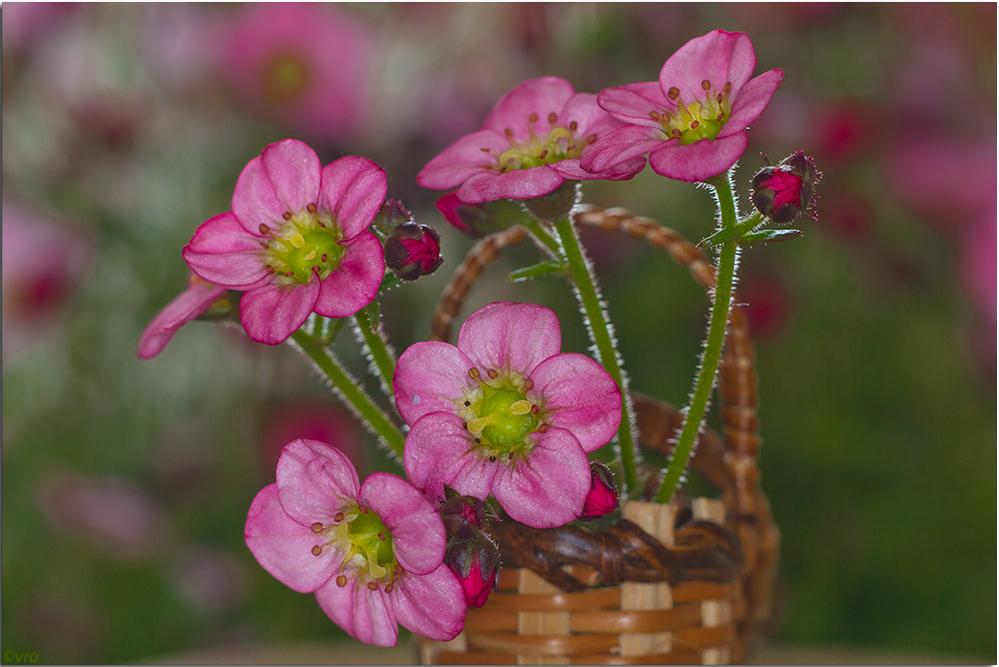 ein kleiner Blütengruß