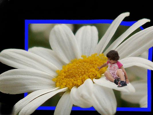 ... ein kleiner Blumengruß ...