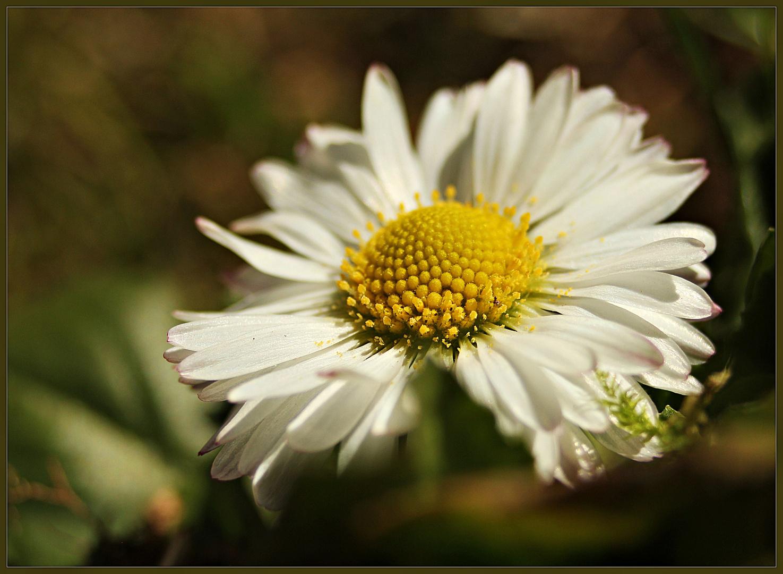 ein kleiner Blumengruß für Euch....