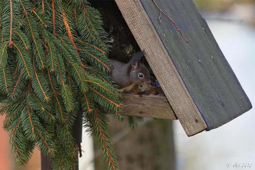 Ein kleiner Dieb im Vogelhaus! ...! ;-)