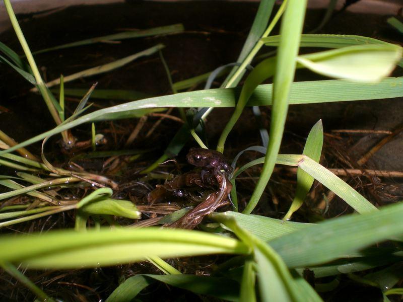 Ein Kleiner Frosch
