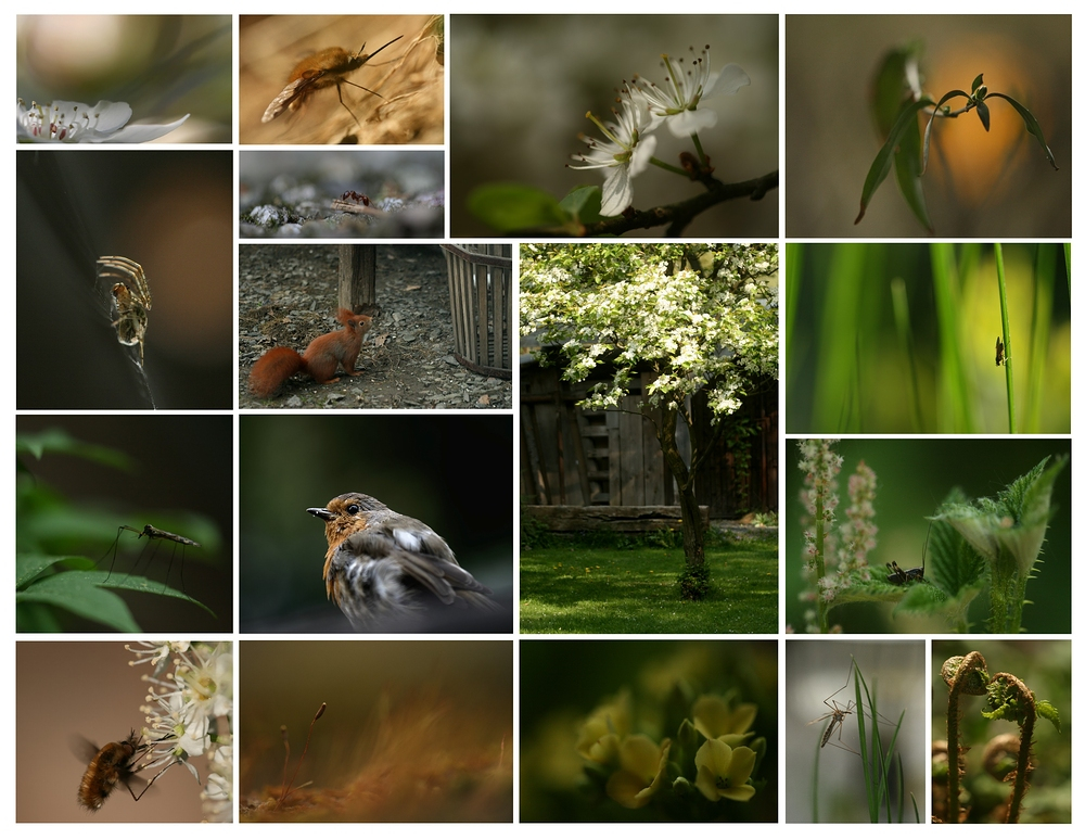 ein kleiner Frühlingsgruß ....