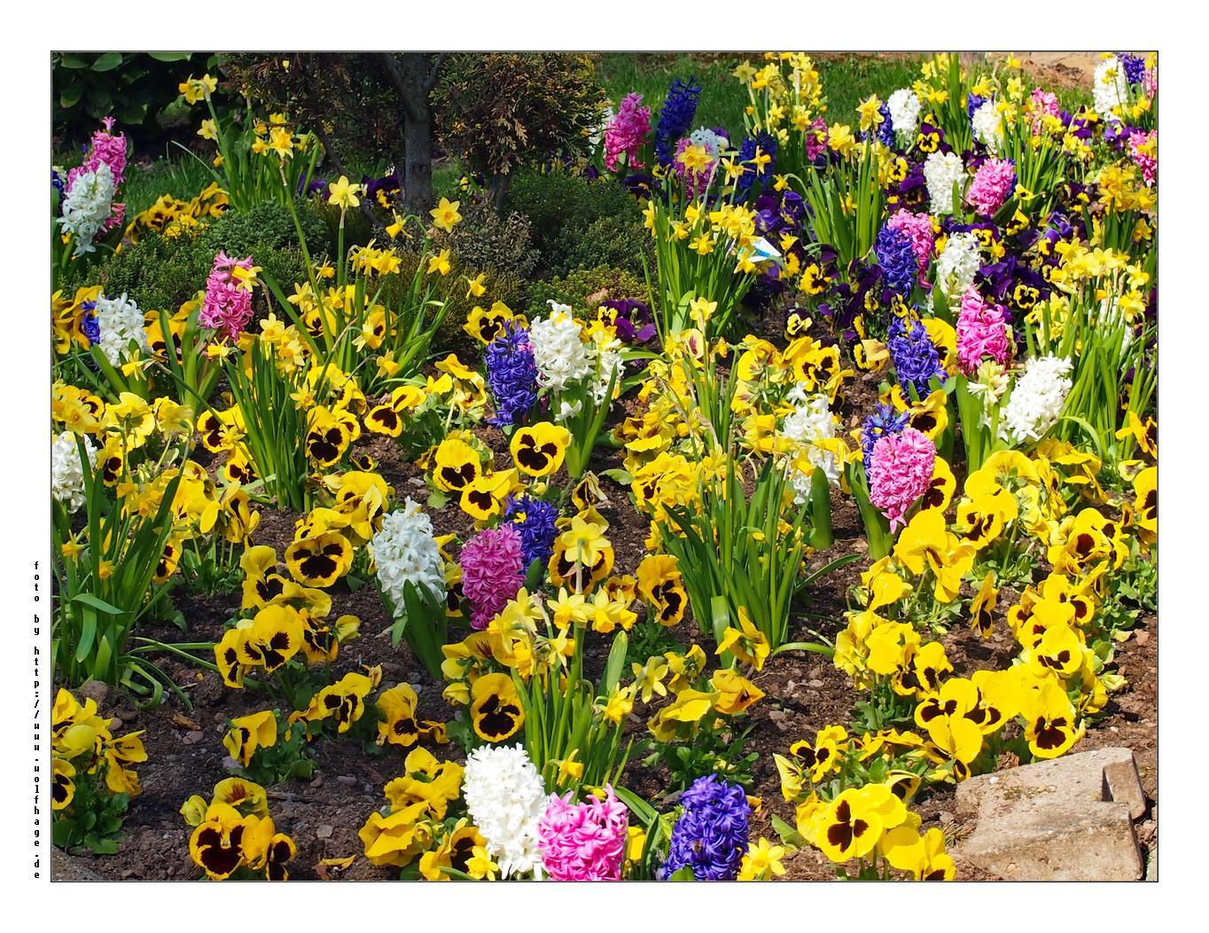 Ein kleiner Frühlingsgruß....