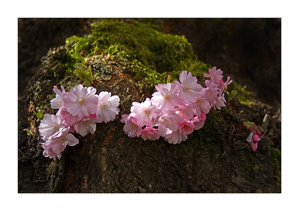 Ein kleiner Frühlingsgruß