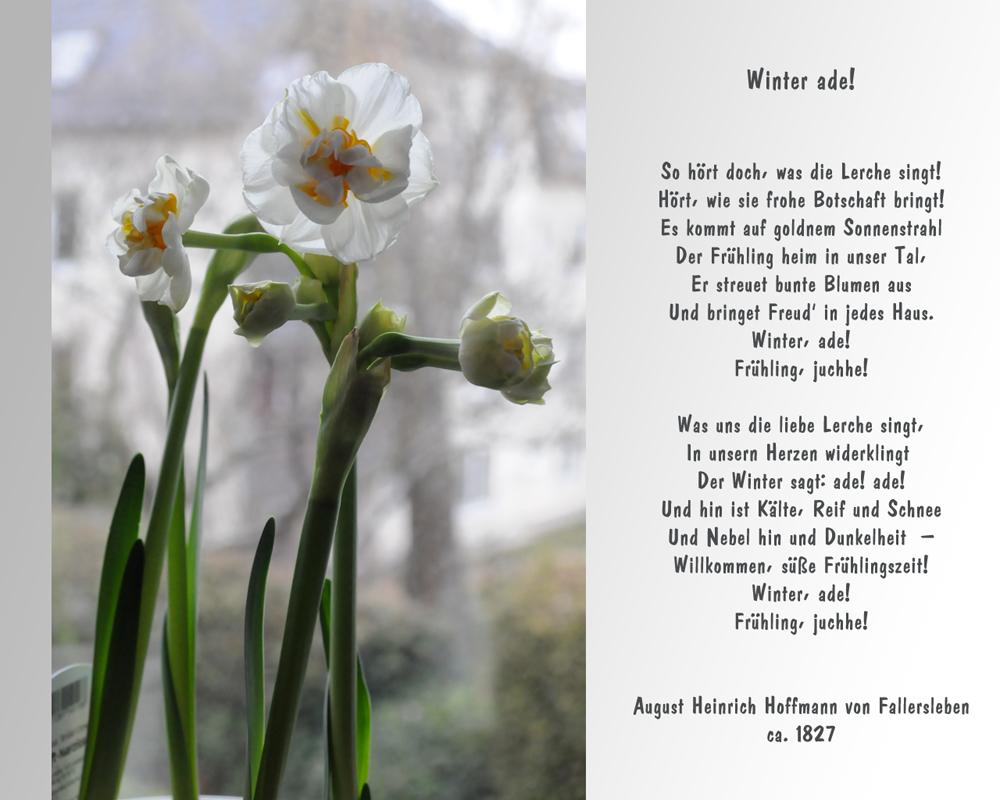 Ein kleiner Frühlingsgruß..