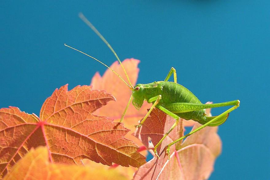 ... ein kleiner grüner Freund beim Sonnen auf dem Balkon...
