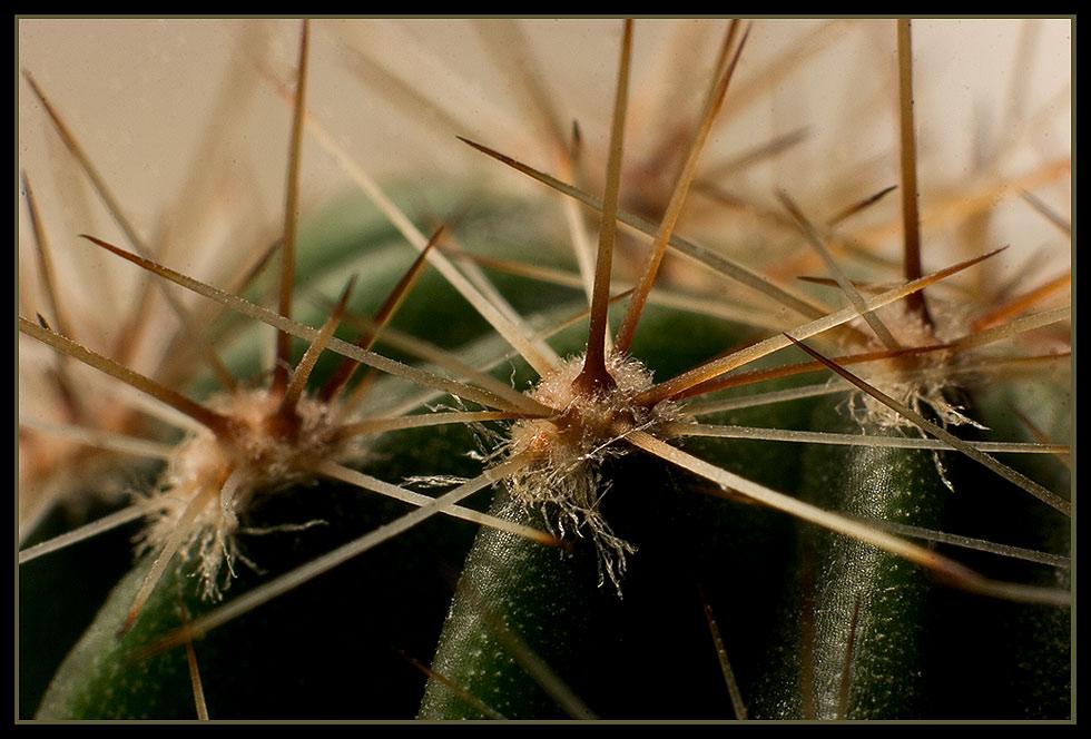 Ein kleiner grüner Kaktus......