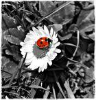 Ein kleiner Marienkäfer