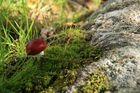 ein kleiner Pilz