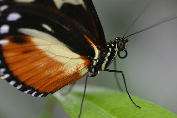 Ein kleiner Schmetterling ganz groß.