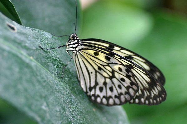 Ein kleiner Schmetterling ganz groß