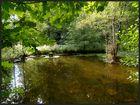 Ein kleiner Teich...