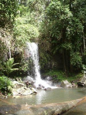 Ein kleiner Wasserfall in der Nähe von Brisbane