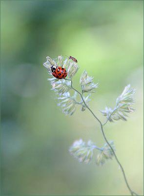 Ein kleines Käfer-Geschenk ...