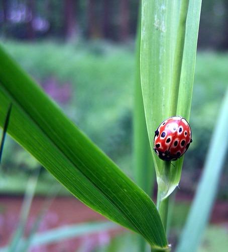 Ein kleines Käferli