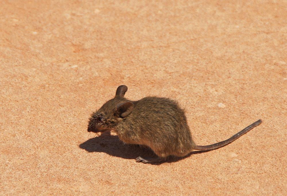 ..ein kleines Mäuschen 1..
