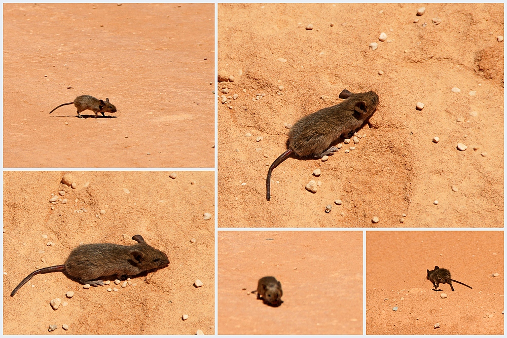 ..ein kleines Mäuschen 2..