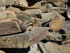 ein kleines Streifenhorn