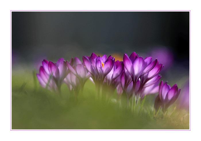 ein kleines Stückchen Frühling