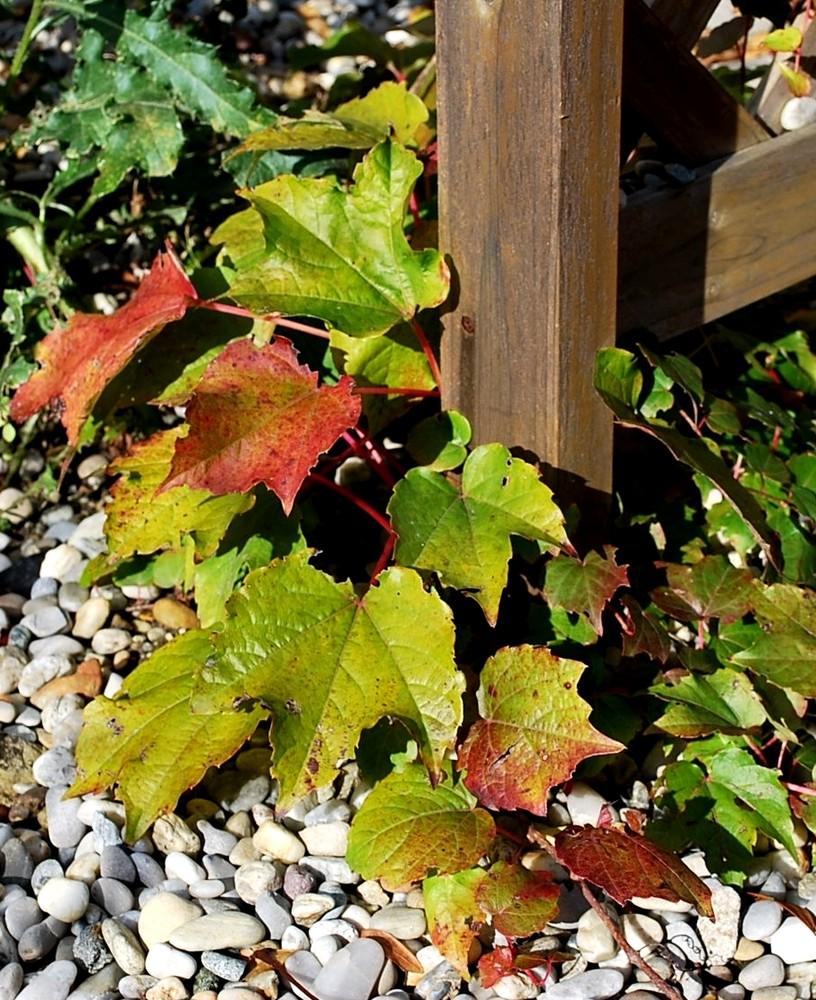 Ein kleines Stückchen Herbst