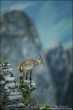 Ein Kletterkünstler